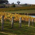 红叶深处飘酒香——探访澳大利亚奥兰治小镇